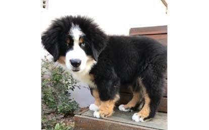 Loki Pet of Month April18