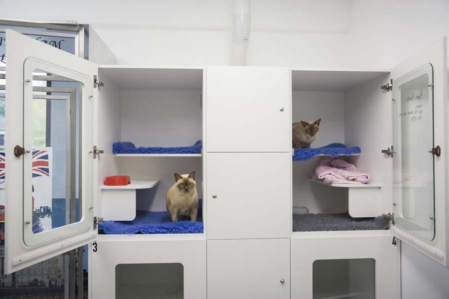 Cat Hotel Cosy Cat Condo
