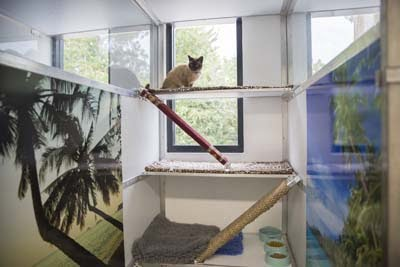 Cat Hotel Luxury Double Suite