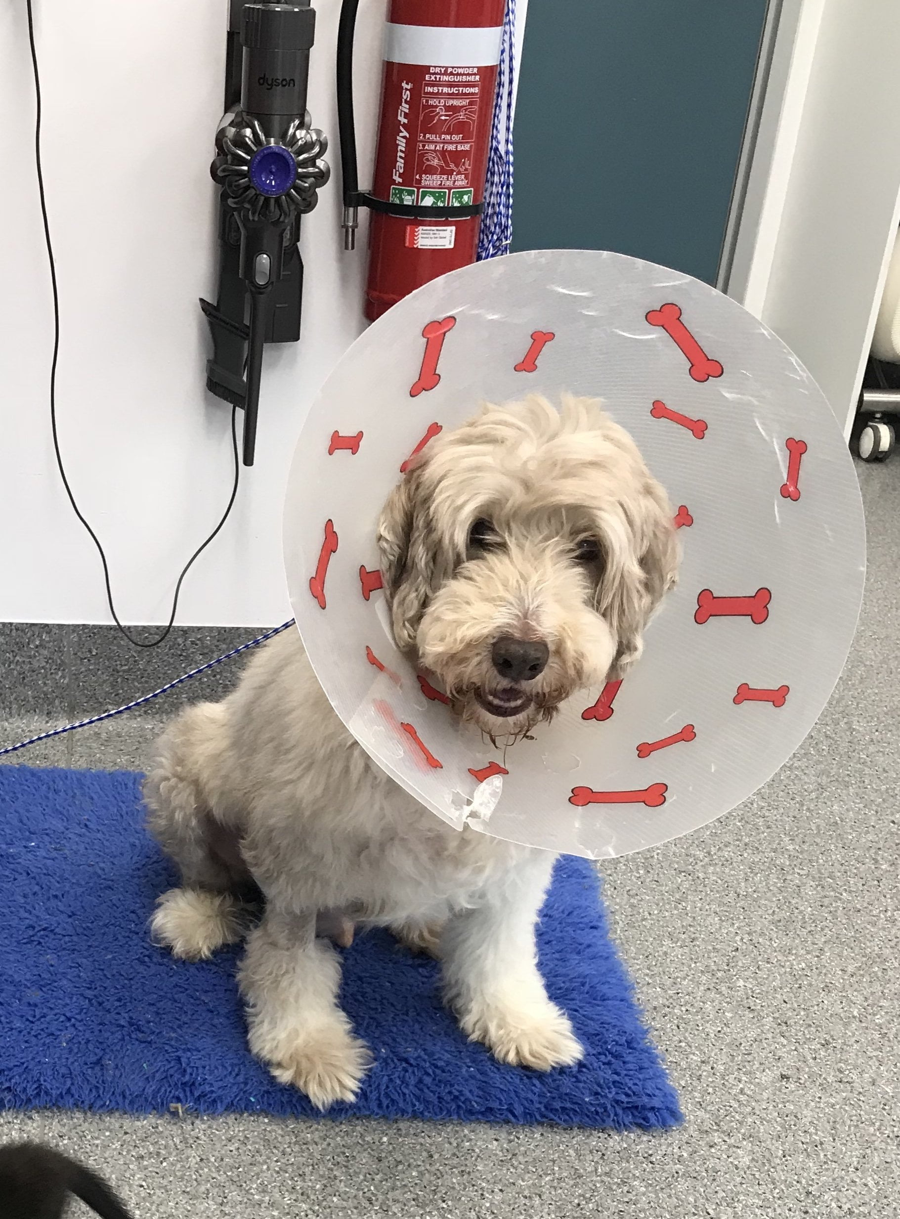 Ollie Turramurra Vet Pet of the Month
