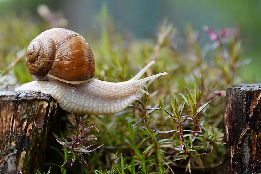 Snail Danger for Dogs