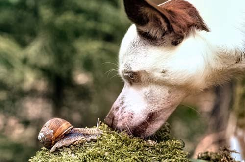 Dog and Snail