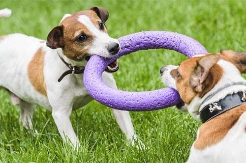 Dog Tug o War