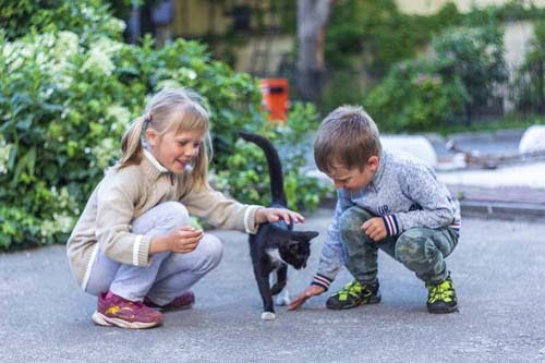 Cat and Kids